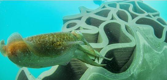 récifs-artificiels-3D-printing-agde-544xauto_1_1